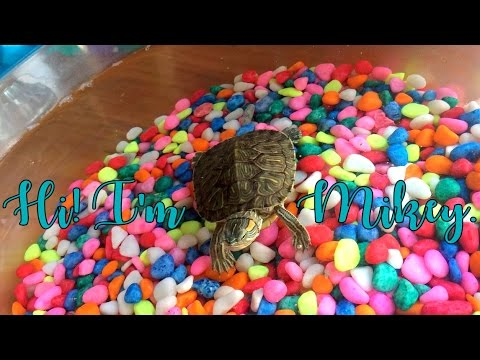 How To Feed A Baby Turtle
