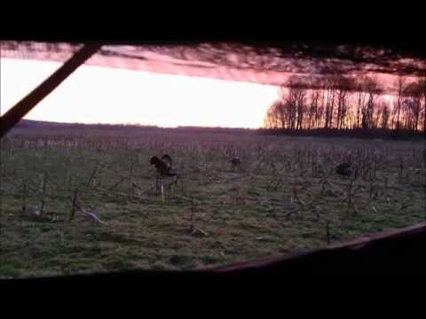 West TN Turkey Hunt; 4-3-13