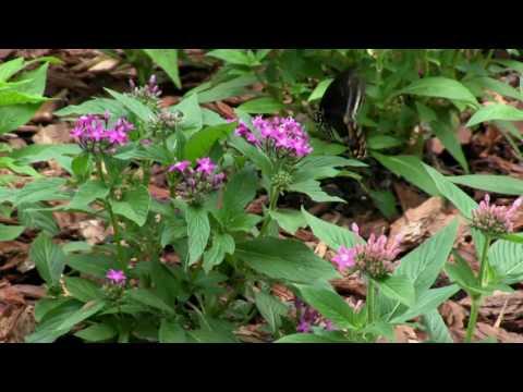 Wildlife Habitat: Duke Forest