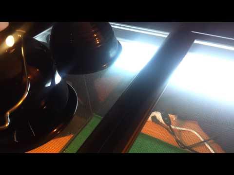 Bearded dragon uvb lighting and heat bulbs guide