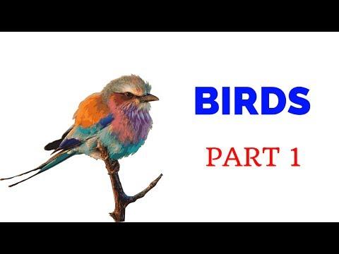 Birds in Kannada - Part 1 - Learn Kannada