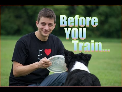 Before you train your dog make sure...