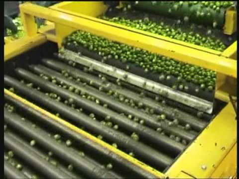 SGE Brussel Sprout Processing