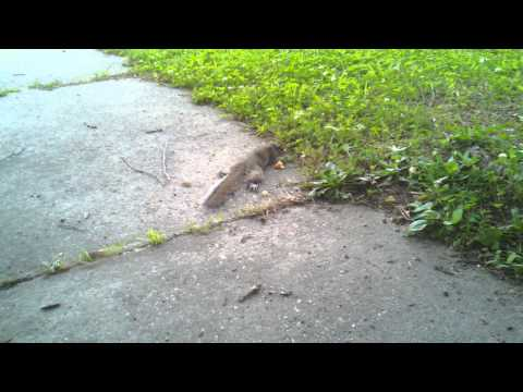 Can you tell what's wrong? We found a sick squirrel in the front yard