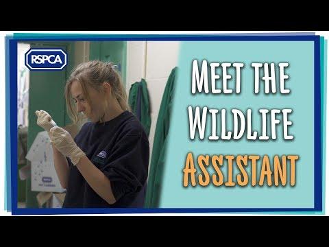 Meet the Wildlife Assistant