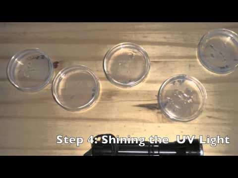 Google Science Fair - Effect of UV Light on Bacteria