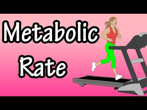 Metabolic Rate - What Is Metabolic Rate - Basal Metabolic Rate - How Many Calories Burned In A Day