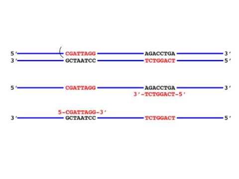 PCR primer tips