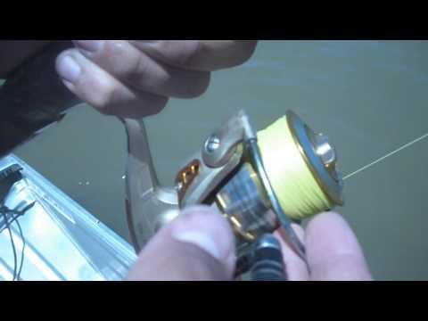 Brisbane River Bullshark and Threadfin Salmon