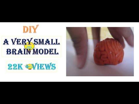 Very Simple BRAIN Model Making Using Clay(Play-Doh) - VISHNU HARIDASS(9 yrs old)