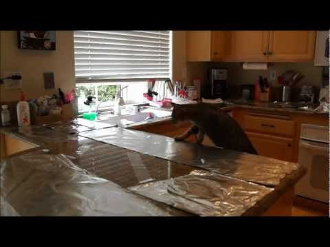 Cat countertop surfing prevention- aluminum foil and packing tape