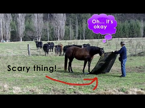 Horse Tricks 101 - Turning scary things into fun things