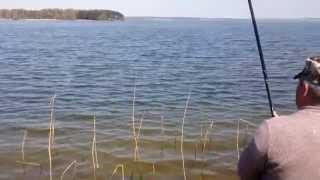 ловля спиннингом на минском море