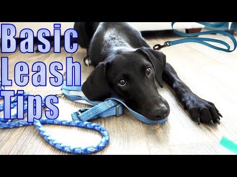 Leash Walking Tips  |  Dog Scared of Leash?