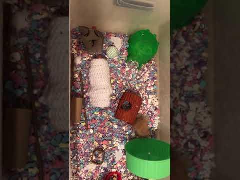 Hamster bin cage setup w/Jax