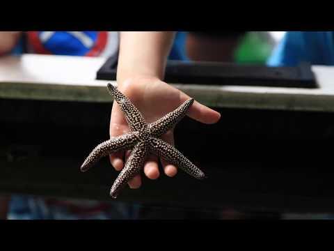 Florida Travel: How to Visit the Gulf Specimen Marine Lab