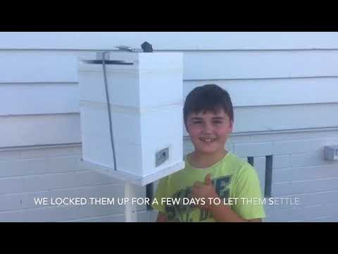 Water meter rescue of australian native bee hive by young boy