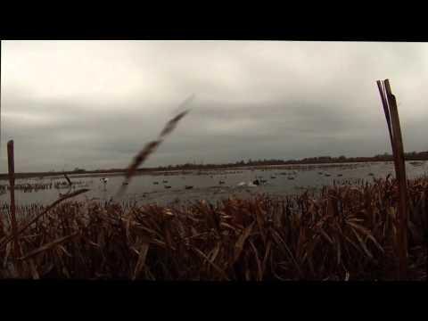 Mississippi duck hunting shoveler smackdown