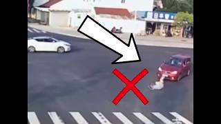 Download Law-abiding pooch puts pedestrian to shame Video