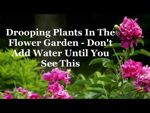 Drooping Plants In The Flower Garden - Don't Add Water Until You See This