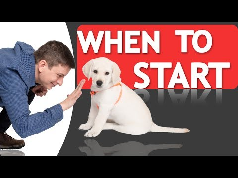 When Should you Start Training your Dog?