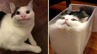 Funny Animal Videos that Make Me Laugh Uncontrollably 😂 (CUTE)
