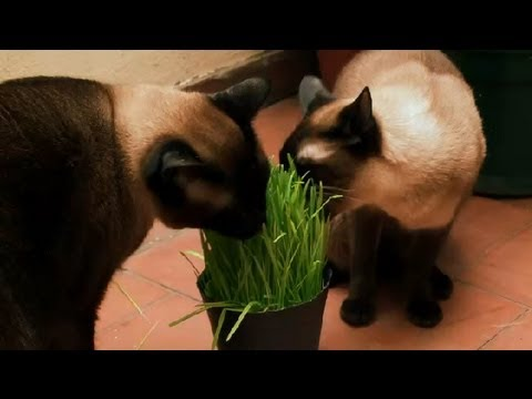 How to Help Your Cat Have a Bowel Movement : How to Take Care of Your Cat