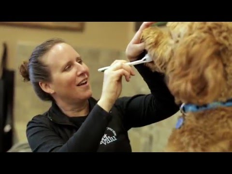 Pet Expert Tips: How to Brush Your Dog's Teeth