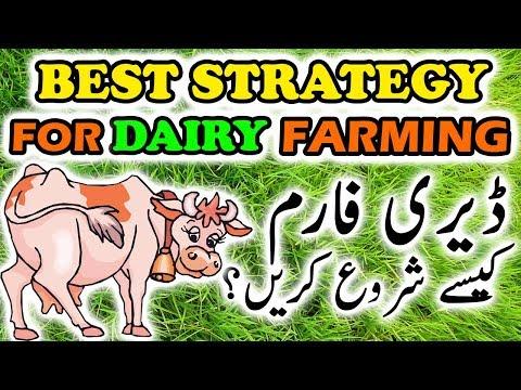 Best STRATEGY for Dairy Farming Financial Management in Urdu /Hindi by Ch Arif Khan (Buffalo Expert)