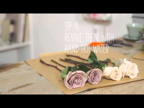 Simple Solutions: Make flowers last longer