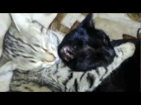 Cats Licking Themselves