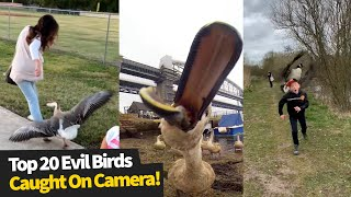 Top 20 Evil Bird Moments Caught On Camera | Funny Birds