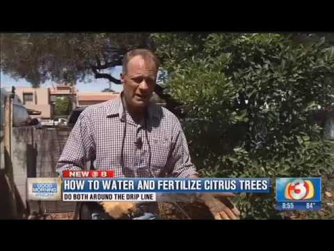 The Garden Guy shows us how to water and fertilize citrus trees