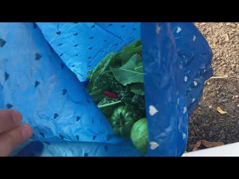 Week 24: The Final Harvest - Container Gardening Season 8