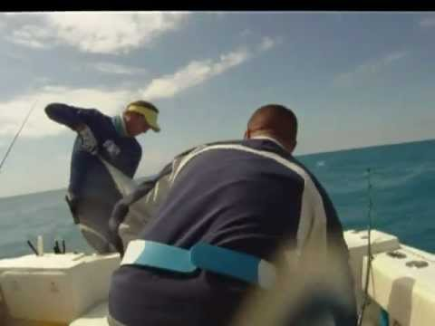 65lb Sailfish catch and relese, Marathon Florida