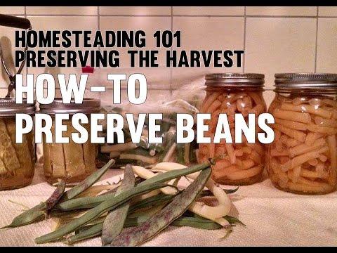 Homesteading 101 Preserving the Harvest - Beans (Canning, Freezing, Pickling)