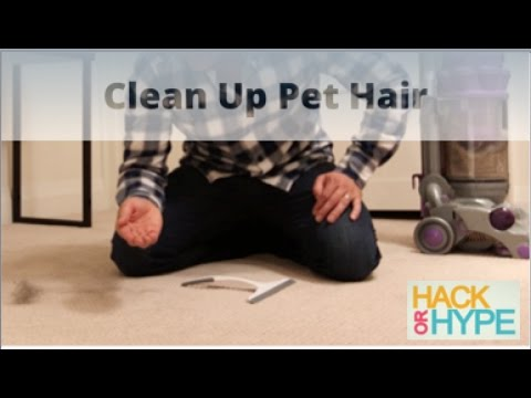 Hack or Hype: How to Clean Pet Hair from Carpet