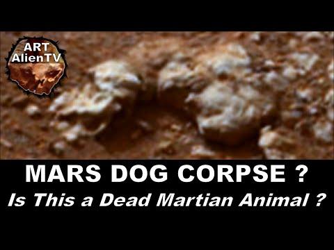 MARS DOG CORPSE ? Is This a Dead Martian Animal ? ArtAlienTV - 738p