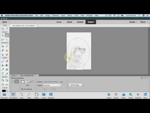 Custom Pumpkin Carving Template with Photoshop Elements 15