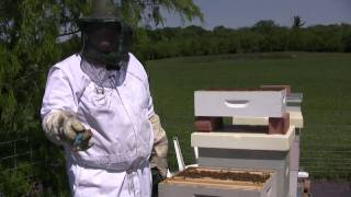 Beekeeping - Dusting for Varroa Mites PART TWO - PakVim net