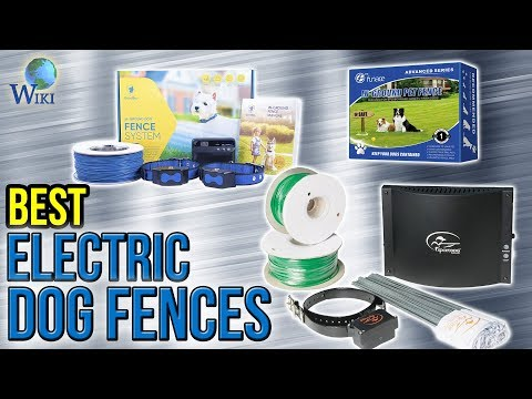 8 Best Electric Dog Fences 2017