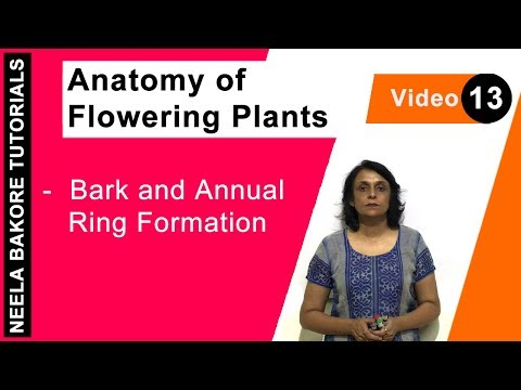 Anatomy of Flowering Plants - Bark and Annual Ring Formation