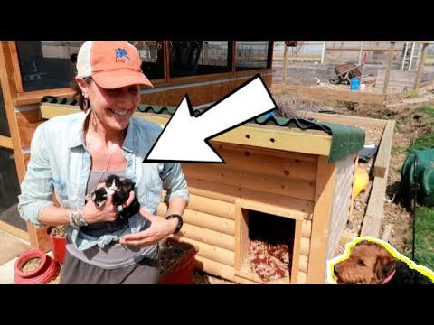 KITTENS BORN IN A DOG HOUSE! 🐱🐕