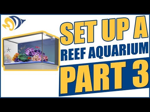 How to Set Up a Reef Aquarium, Part 3: Water Flow & Testing