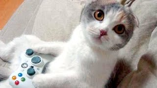 HARDEST CHALLENGE: Try not to laugh or smile - The BEST ANIMAL videos