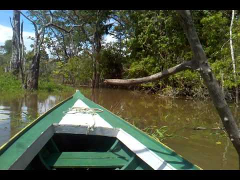 Amazon River tour Manaus, Brazil