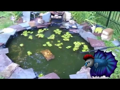How To Drain Your Outdoor Pond Easily