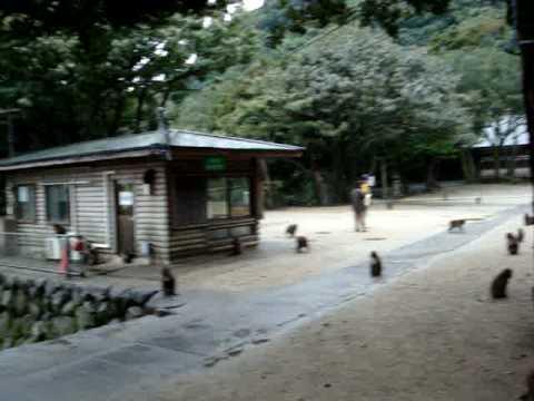 2008.11.09 Monkey Mtn, Mt. Takasaki National Park
