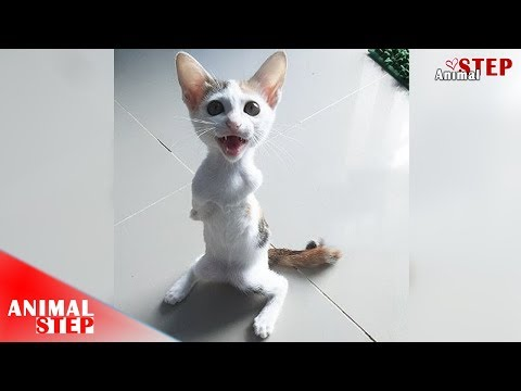 Poor Handicapped Cat – Watch Her Life In Two Years of Growing Up