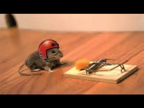 How to Modify a Mouse Trap From Harmless to Deadly
